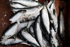 Isca de pesca Imagem de Stock Royalty Free