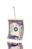 Isca do dinheiro Imagens de Stock
