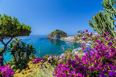 Ischia and Bougainvillea glabra Stock Photo