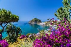 Ischia und Bouganvilla glabra Stockfoto