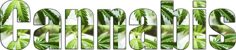Iscrizione di Logo With Marijuana Leaves Inside della cannabis con il fondo bianco Fotografie Stock Libere da Diritti