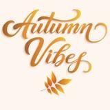 Iscrizione disegnata a mano - Autumn Vibes con le foglie di autunno Calligrafia scritta a mano moderna elegante Illustrazione del Immagine Stock