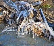 Isdroppar på gräset Arkivbilder