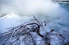 Ised drzewo blisko Niagara Spada w zimie Zdjęcie Royalty Free