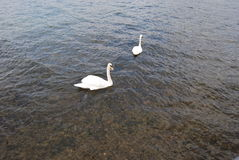 Iseo湖 免版税库存照片