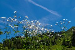 Isere,france Stock Photography