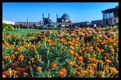 Цветки в Isfahan, Иране стоковые изображения