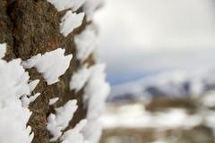 Isgrova spikar på en vagga med en suddig bakgrund arkivbild
