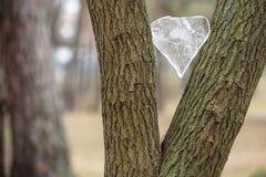 Ishjärta på trädet Valentine& x27; s-dagbegrepp Arkivbild