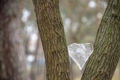 Ishjärta på trädet Valentine& x27; s-dagbegrepp Arkivbilder
