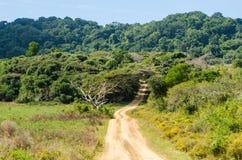 ISimangaliso-Sumpfgebiet-Park Gartenweg, Südafrika Stockbilder