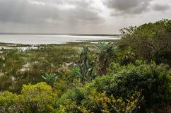 Isimangaliso-Sumpfgebietpark, vegeattion Garten-Weg Südafrika Stockbilder