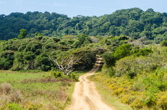 Isimangaliso wetland park. Garden route, South Africa. Stock Images