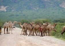 Isiolo,肯尼亚 免版税库存照片