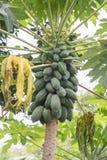 Isiolo, Kenya nordique Photo stock