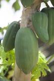 Isiolo, Kenya nordique Photos stock