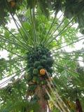 isiolo Kenya północny melonowa drzewo obraz royalty free