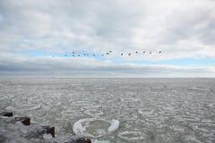 Iskall Chicago vinter Lake Michigan som, är molniga med en sticka av himmelblått som igenom kikar och en linje av flyggäss över h royaltyfria foton