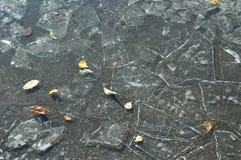 Iskall pöl med sprickor och höstsidor Arkivbild