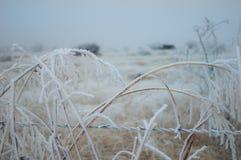Iskall snö täckt fält Royaltyfri Fotografi