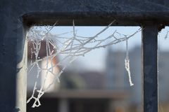 Iskall spindelnät på en vintermorgon arkivfoton