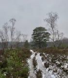 Iskall vandringsled mellan snö, ljung, buskar och träd på en vinterdag royaltyfri fotografi