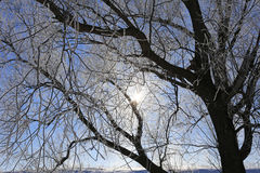 Iskalla trädfilialer mot den blåa himlen royaltyfri fotografi