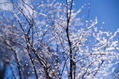 Iskalla trädfilialer mot en klar blå himmel royaltyfri foto