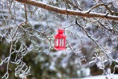 Iskalla trädfilialer och rött langern Arkivbilder
