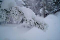 Iskallt sörja trädet Fotografering för Bildbyråer