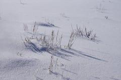 Iskallt torkat gräs på brusandesnö Royaltyfri Bild