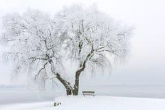 Iskallt träd på en iskall sjö Royaltyfria Foton