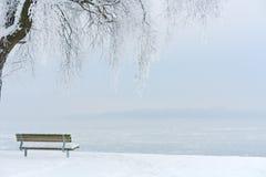 Iskallt träd på en iskall sjö II Arkivbilder