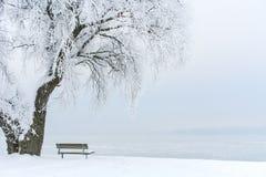 Iskallt träd på en iskall sjö III Royaltyfri Bild