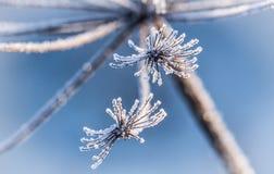 Iskristaller på blomman Royaltyfria Bilder