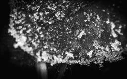 Iskristaller på ett blad i vinter i UK fotografering för bildbyråer