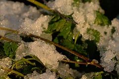 Iskristaller på gröna blad Arkivbild