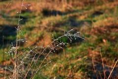 Iskristaller på högväxt gräs Royaltyfri Foto