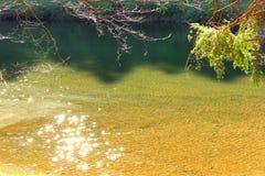 Iskrzasty jezioro w lesie Obraz Royalty Free