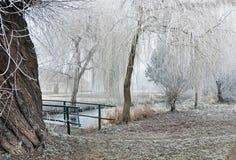 Isläggning på träd och buskar nära bron Royaltyfria Bilder