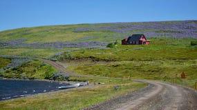 Isländische Landschaft auf Halbinsel Vatnsnes Ein rotes Haus, Lupinen, der Ozean und zwei Boote lizenzfreie stockfotografie