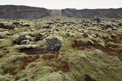 Isländische Landschaft des Moosfeldes Lizenzfreies Stockbild