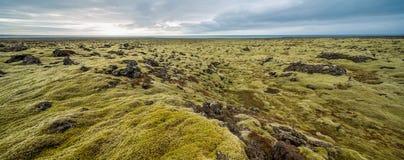 Isländische Landschaft des Moosfeldes Stockbild