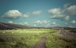 Isländische Landschaft mit dem Weizen verpackt und den Wolken Lizenzfreie Stockbilder
