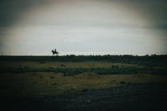 Isländischer Pferderueckenreiter auf schwarzem Sandstrand stockfotografie