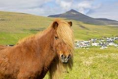 Isländisches Pferd auf einer Sommer-Wiese, einem Berg und einem Saksun-Dorf stockbild