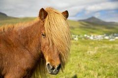 Isländisches Pferd auf einer Sommer-Wiese, einem Berg und einem Saksun-Dorf lizenzfreie stockfotografie