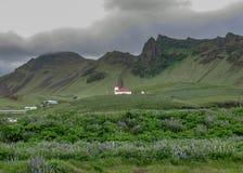 Isländsk bygd med kyrkan, lupine och berg på bakgrunden i södra Island, Europa royaltyfri fotografi