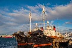 Isländska valjaktfartyg fotografering för bildbyråer