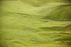 Isländskt landskap med får Arkivbild
